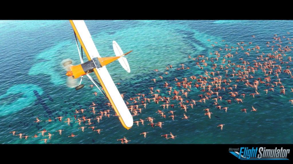 Microsft Flight Simulator 2020 Sea Flamingos