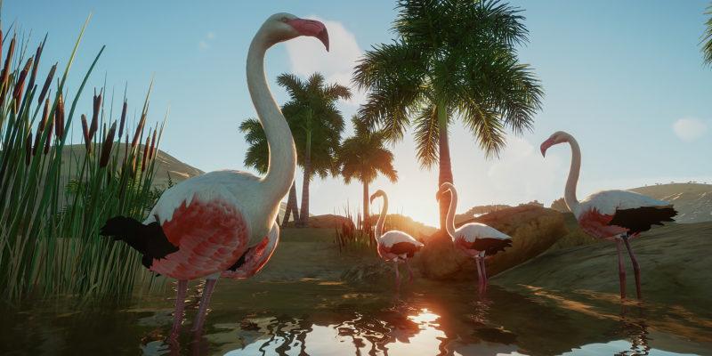 Planet Zoo Flamingos