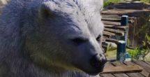 Baldurs Gate Iii Druid Bear Feat