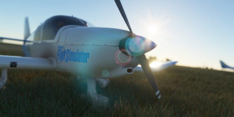 Microsoft Flight Simulator Robin In The Grass